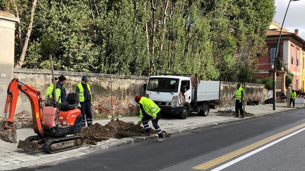 Lavori alberi via Croce 2-3