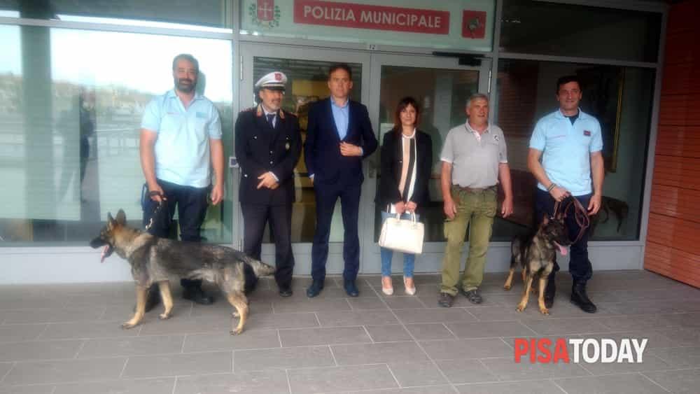 cani polizia municipale
