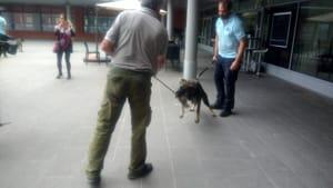 cane antidroga municipale