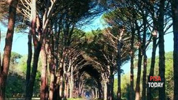 Parks, una settimana di eventi al Parco di San Rossore