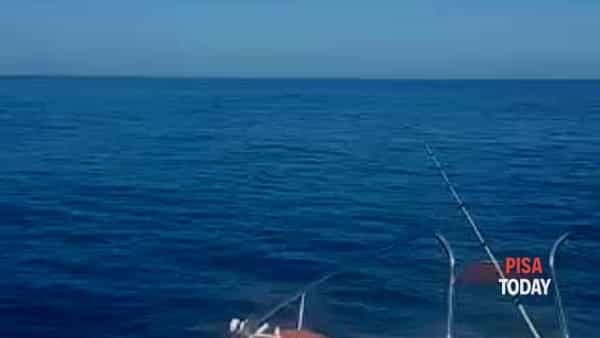 VIDEO   Delfini avvistati al Gombo