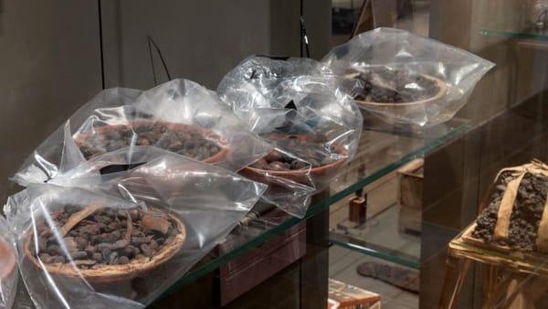 odore museo egizio torino 2-2-2