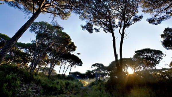 Giornata Europea dei Parchi: pioggia di eventi a San Rossore