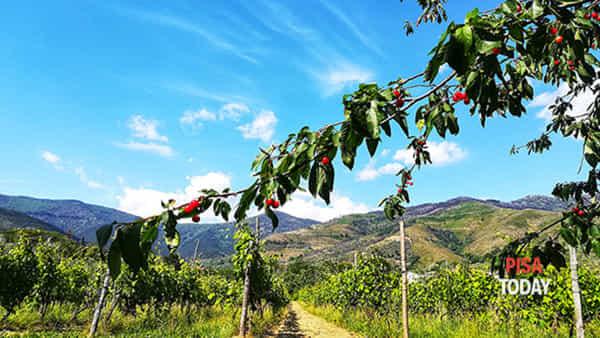 Degustazione vino con passeggiata in vigna