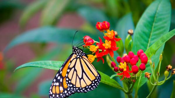 madama_butterfly_Linda_Rossi-2