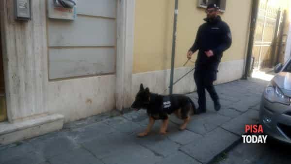 unità cinofila polizia municipale-2