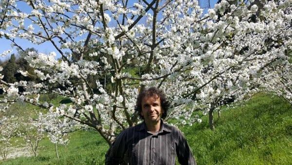 Passeggiata tra i ciliegi a Lari