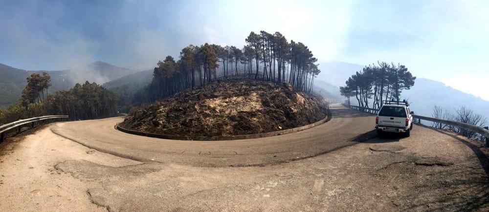 Immagine strada con alberi bruciati sul monte serra